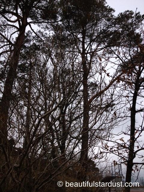 Dark trees 2
